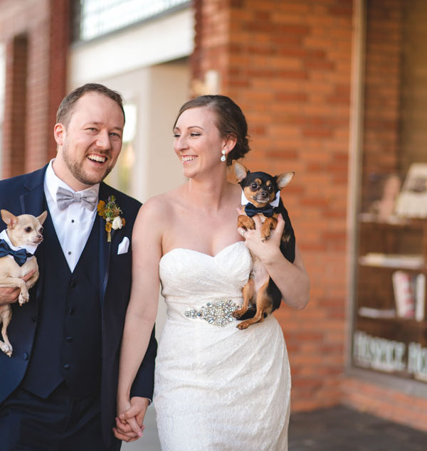 chihuahuas in wedding photos