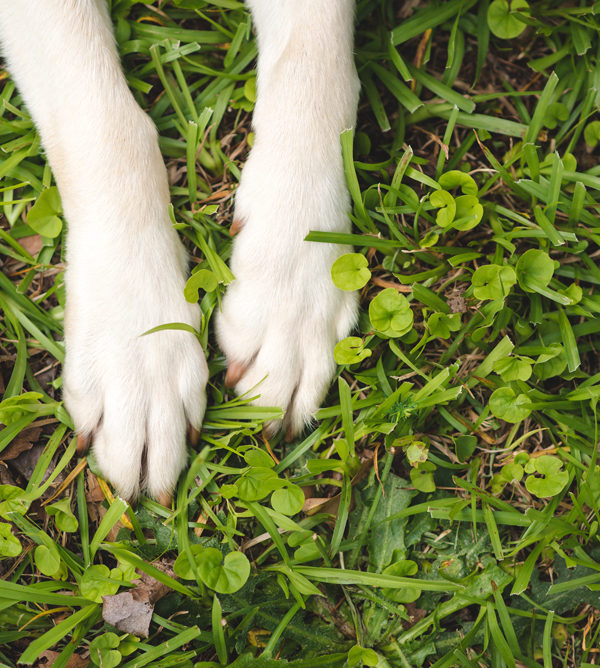 greenville, sc pet photographer | paislee